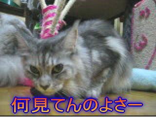 20061107152314.jpg