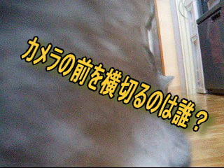 20061108134634.jpg