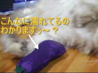 20061108134646.jpg
