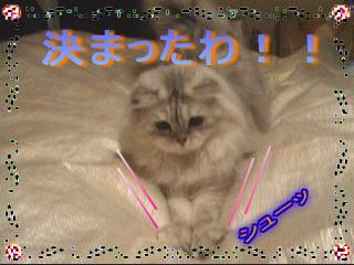 20061109161518.jpg