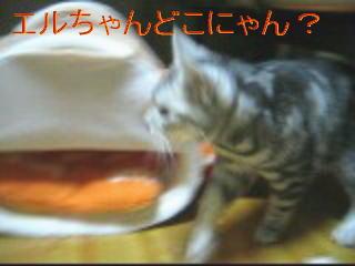20061110165939.jpg