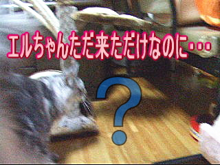 20061114153610.jpg