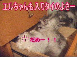 20061119162713.jpg
