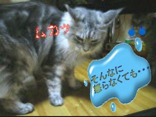 20061123224333.jpg