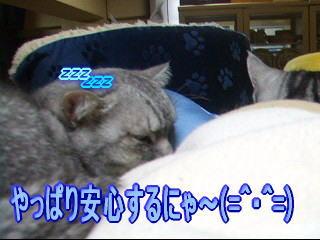 20061126003403.jpg