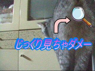 20061127115941.jpg