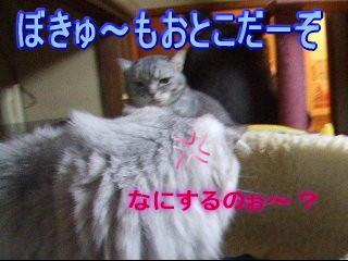 20061209011029.jpg