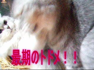 20061210222007.jpg