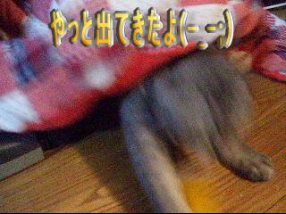 20061212135703.jpg
