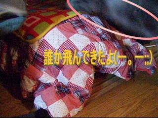 20061212135717.jpg