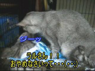 20061218172421.jpg