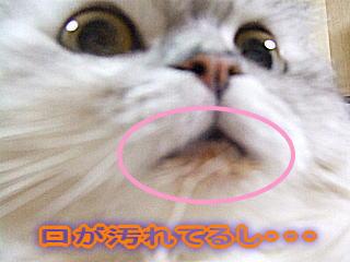 20070107082056.jpg