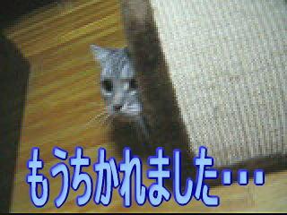 20070116155910.jpg