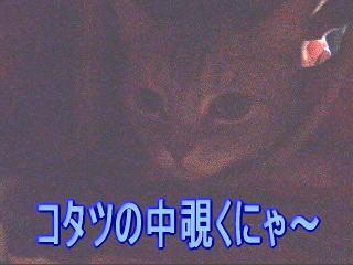 20070119225956.jpg