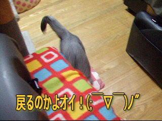 20070119230132.jpg