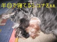 20090719-1.jpg