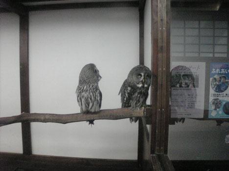 花鳥園090803