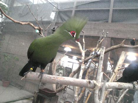 花鳥園090808
