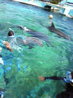 イルカと泳ごう2