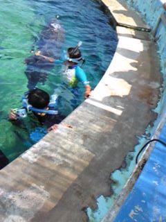 イルカと泳ごう3