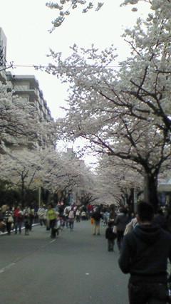 桜坂の祭り 1