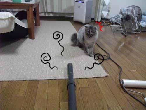 DSCF2136_convert_20080918031212a.jpg