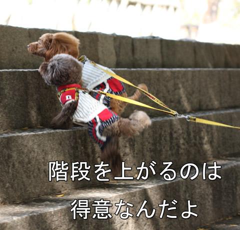大阪城11025