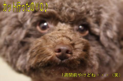 YES みーちゃん3