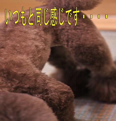 YES みーちゃん11
