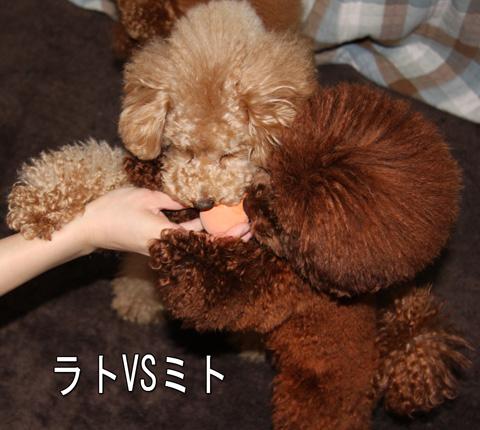 静岡からの愛2