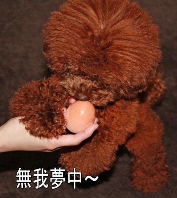 静岡からの愛4