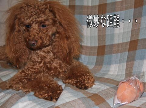 静岡からの愛6