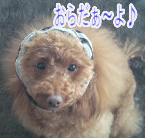 田吾作0902