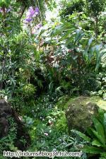 牧野植物園1