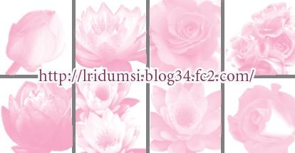 ブラシ見本1花