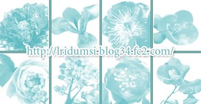 ブラシ見本2花