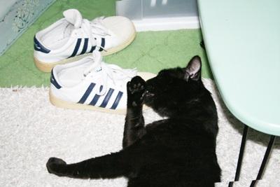 転がる猫2
