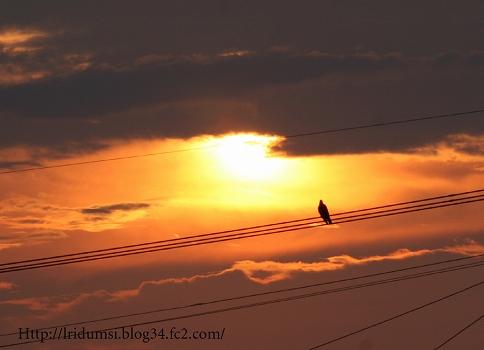 夕日と烏2
