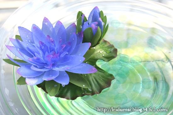 青い睡蓮2