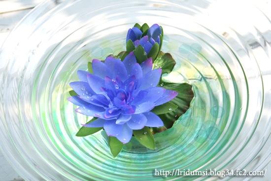 青い睡蓮3
