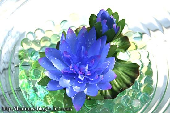 青い睡蓮1