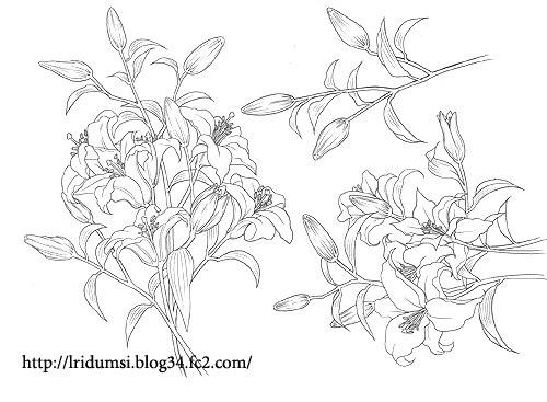 百合の花 線画