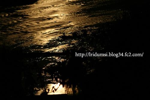 月明かりが照らす水面