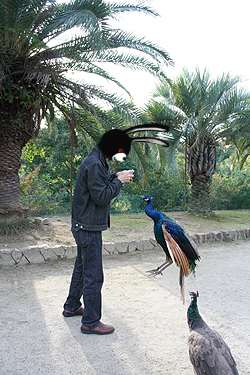 飛ぶ孔雀2