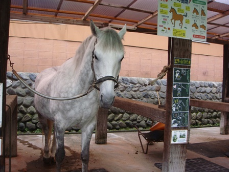 お馬さん1