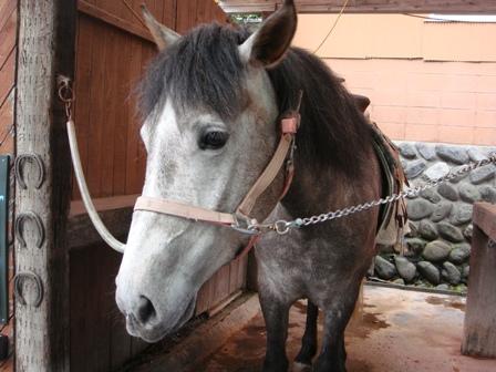 お馬さん2