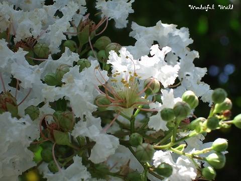 2007_0730yoko0014.jpg
