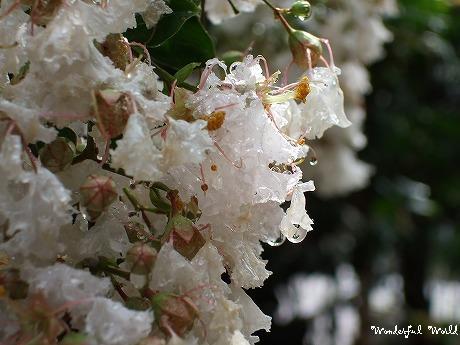 2007_0801yoko0039.jpg