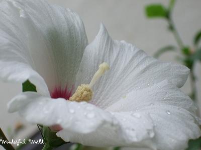 2007_09040009.jpg