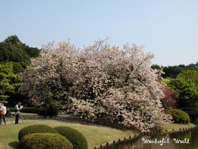 n.ichiyo5.jpg